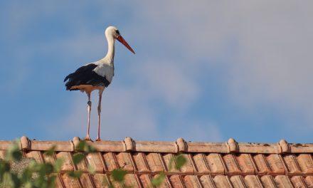 Rynny z PCV a pokrycie dachowe